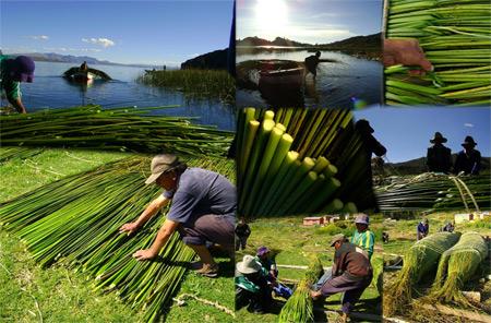 Hacer una balsa con Totora - Aimaras de Titicachi- Pais Arco.iris