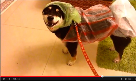 Impermeable improvisado para perro hecho con tres bolsas de plástico - Canal de phxtw