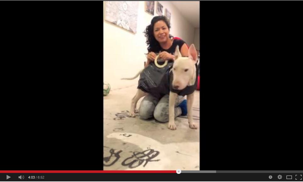como hacer un impermeable para perros - Canal de Patricia LoCor