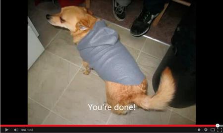 como hacer camiseta, con capucha, para mascota,perro,gato - Canal de traskillano