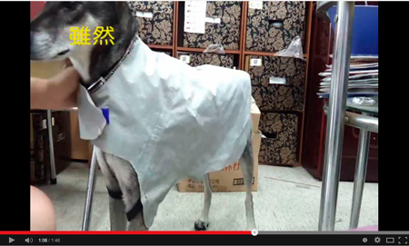 diy - Dog raincoat - Canal de 白小白