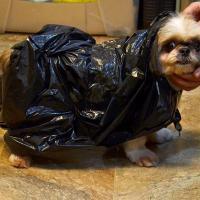 Cómo hacer un impermeable para perros.